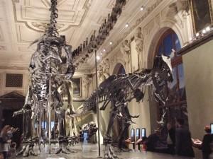 Naturhistorisches Museum Vienna Dinosaurs
