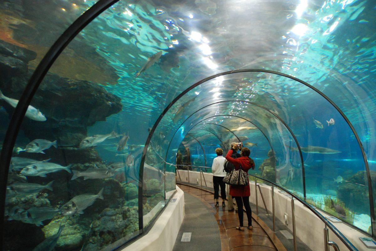 Aquarium Barcelona underwater shark tunnel